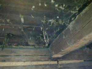 Hämähäkin seittejä vuosikymmenten ajalta