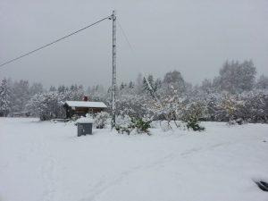 Omenapuut ja merjapensaat lumessa